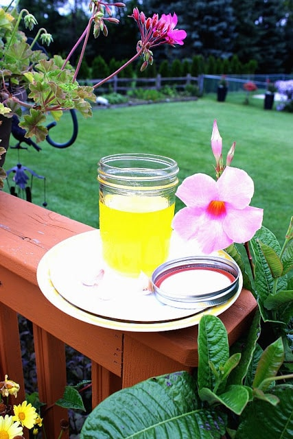 Garlic Ghee in a backyard setting with tropical pink flowers.
